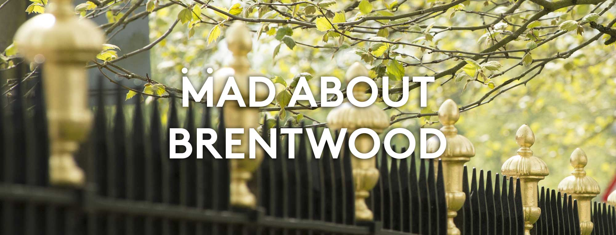 Mad About Brentford